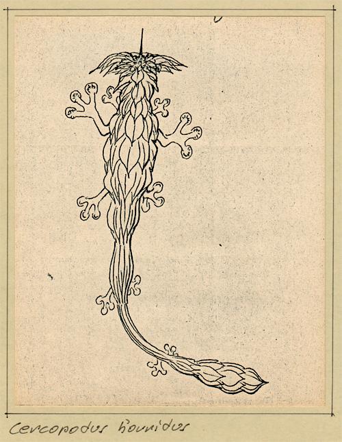 Cercopodus horridus
