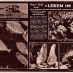 1951 Wiener Bilderwoche, Leben Im Riff